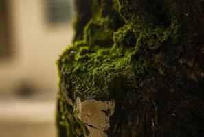 Green moss on tree