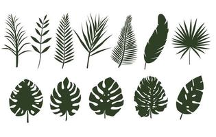 Monochrome leaves of different tropical plants vector