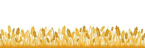 Cartoon yellow wheat isolated on white