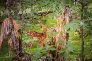 Deer in green forest