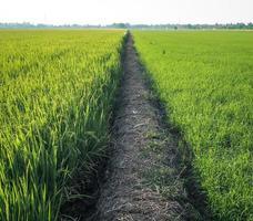 Walking path in grass field