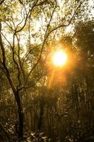 Sunlight shining through trees in forest photo