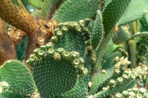 Close-up of flowering cacti