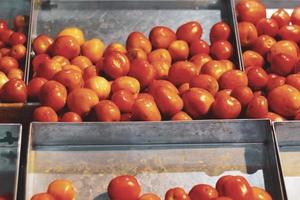 Red tomatoes in metal boxes