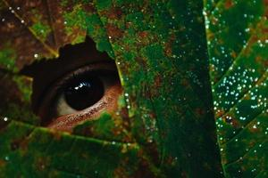 olho chegando através de uma folha foto