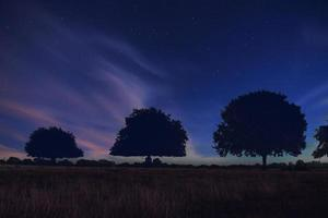 Silhouette of trees against starry blue sky