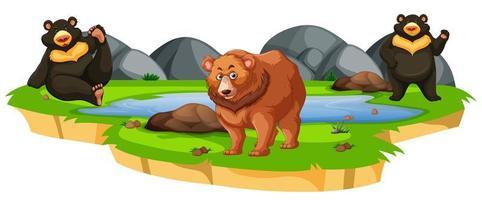 osos alrededor de un estanque en blanco vector
