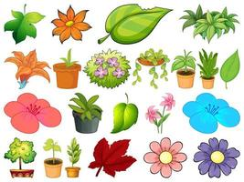 Large set of different plants vector
