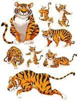 A collection of tiger characters