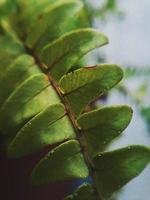 hojas verdes de cerca