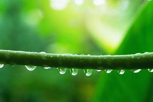 Water droplets attached to a green branch