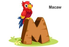 M for Macaw