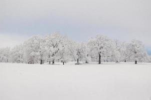 Trees and field covered in snow in Texas