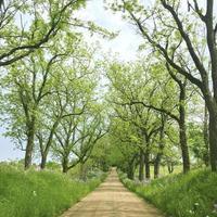 chemin de terre entre des rangées d'arbres et de fleurs photo