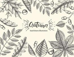 Beautiful autumn leaves on a light background vector