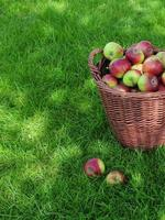 manzanas orgánicas en canasta de mimbre