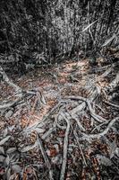 las raíces enredadas