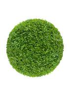 ball of green leaves photo