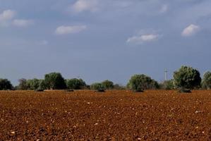 desarrollo agrícola sostenible.