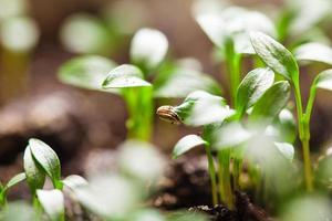 macro seeds growing photo