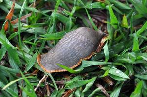 Slug photo