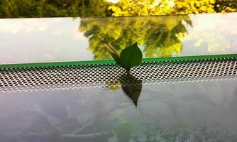Leaf growing out of a terrarium