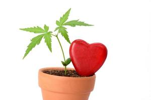 Young plant and red heart shape isolated on white