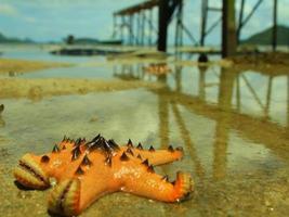 Seastar photo