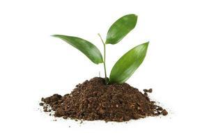 Planta verde joven en suelo aislado en blanco