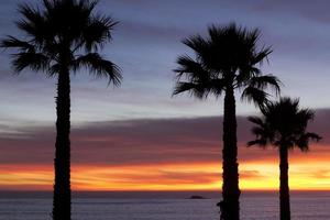 Silhouettes of palm trees at sunset photo