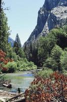 árboles verdes cerca del lago y la montaña foto