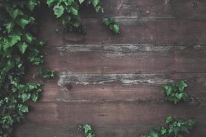 pared de madera con hiedra