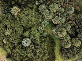 Top view photography of green trees