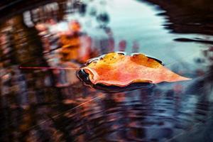 Orange leaf in puddle