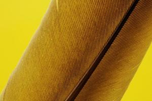 Brown feather yellow textile