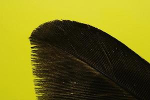 Black feather on yellow background photo