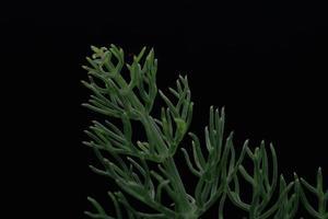 Green plant on black