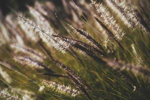 close-up de vegetação selvagem