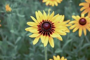 Tilt-shift of yellow sunflower