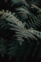 A single fern