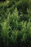 Super vivid green plants
