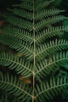 A close up of a fern