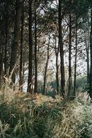 Tall trees in the forest