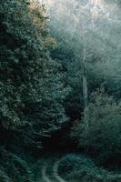 caminho no meio da floresta foto