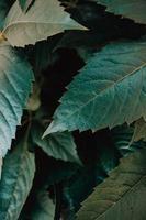 uma maquete de algumas folhas verdes