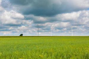 Windmills on corn field.