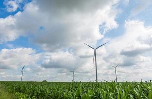 Windmills standing on corn field