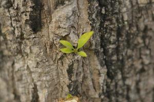 little plant photo
