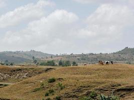 Livestock photo
