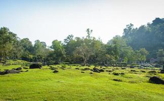 stone ground and grass